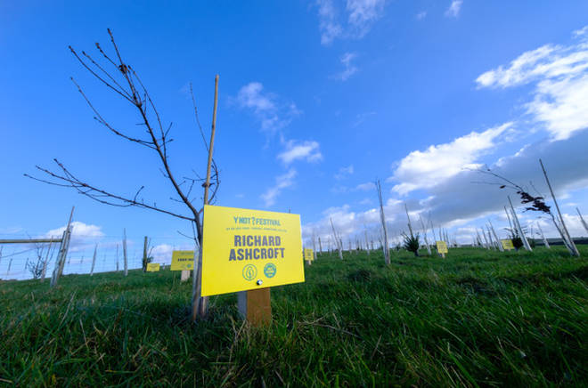 Y Not Festival plants trees named after some of its line-up such as Richard Ashcroft, Royal Blood and Bombay Bicycle Club