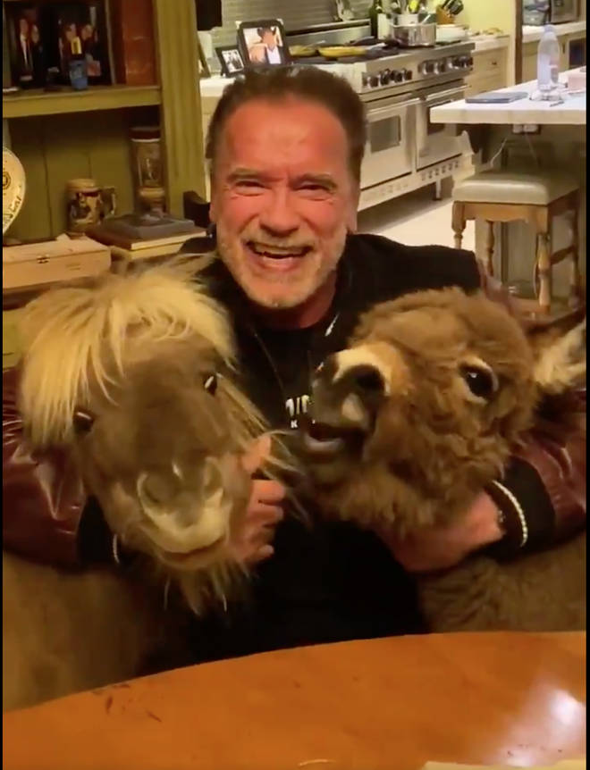 Arnold Schwarzenegger shares video on social media with ponies Whiskey and Lulu urging fans to stay indoors
