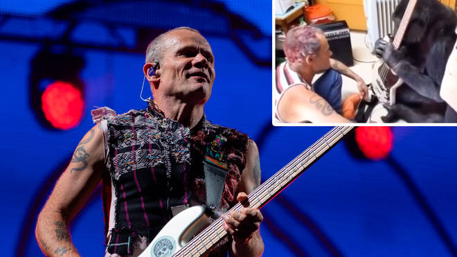Red Hot Chili Peppers bassist Flea with a video of himself and Koko the gorilla inset