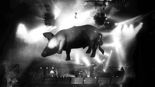 The famous Floyd pig goes aloft at a show in Nijmegen, July 1989