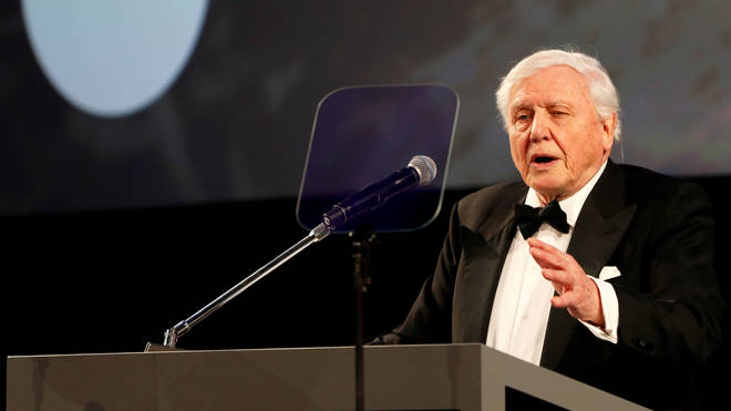 David Attenborough's Our Planet premiered at London's Natural History Museum last night